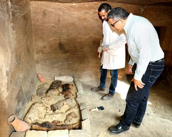 Tomb Full of Sacred Cats and Beetles Found in Sakkara- My Egypt Travel